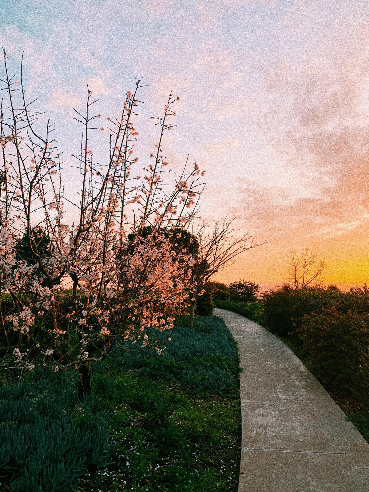 USD campus sunset walk