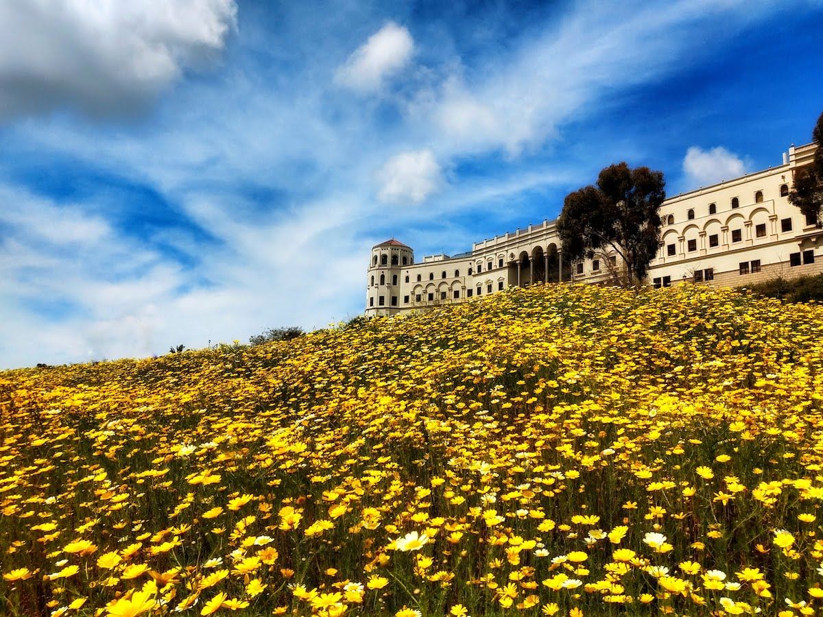 The Shiley Center for Science and Technology from the down the hill, looking up at the sky with yellow flowers in the foreground.